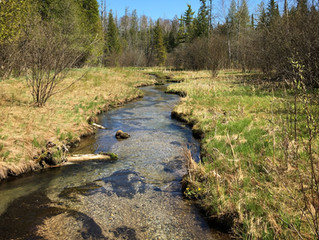 Trout Unlimited donates $25,000 toward reintroducing Grayling in Michigan