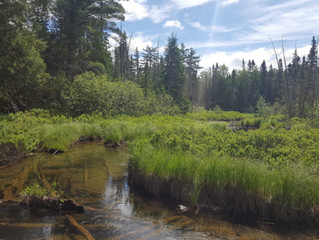 Arctic Grayling Habitat Better Understood