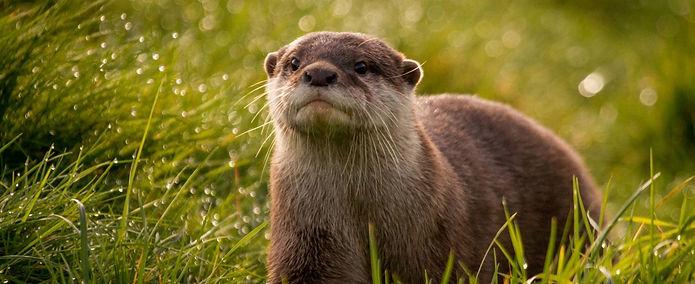 otter_edited.jpg