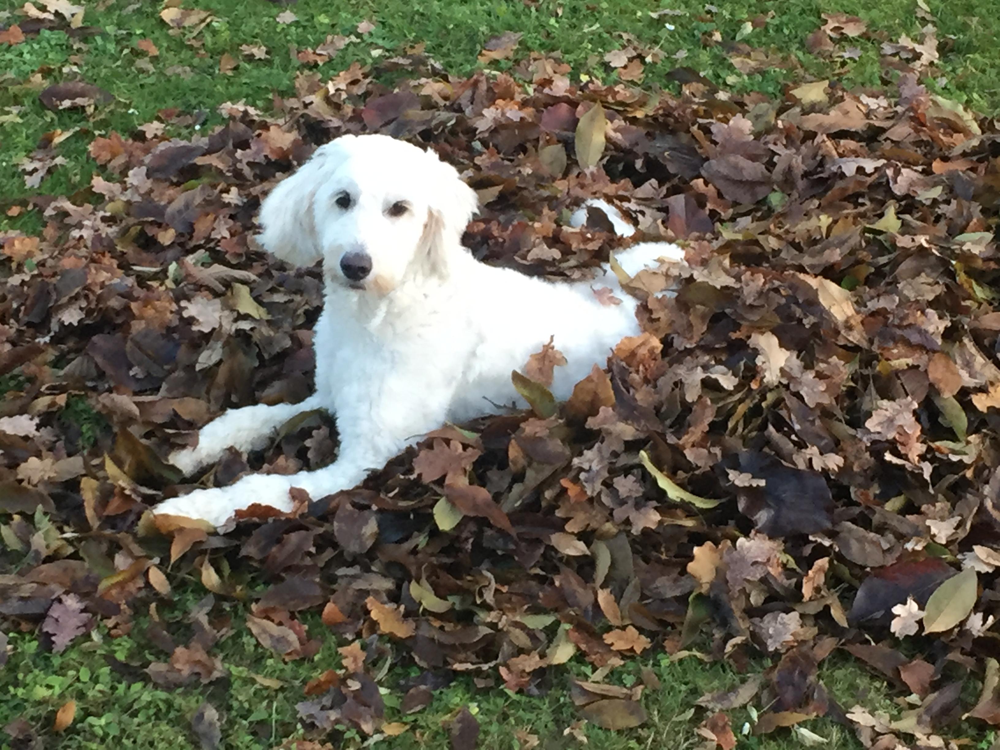 Ich versteck' mich im Herbstlaub
