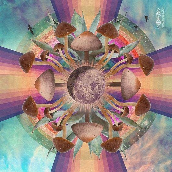 artwork mushrooms colorful