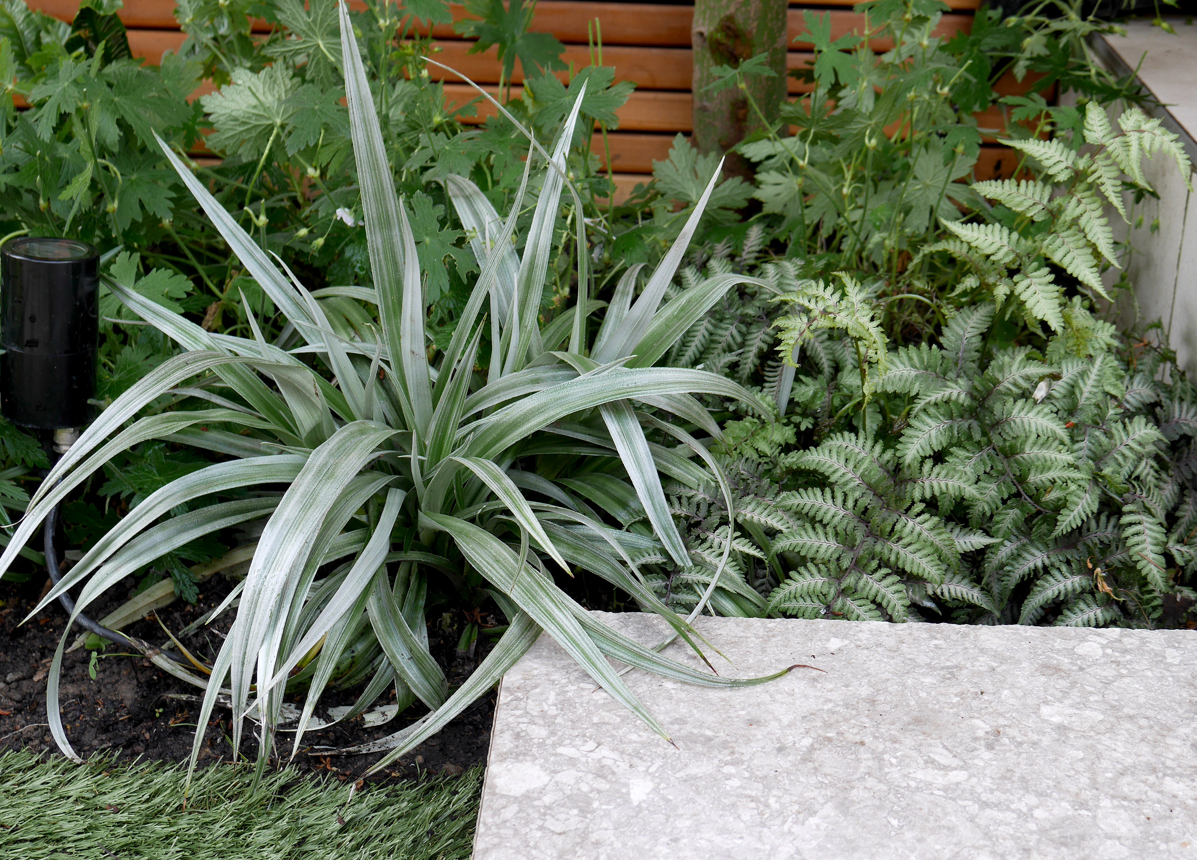 Grey green and purple subdued foliage