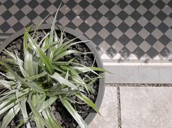 Astelia four season planting and minimal palette