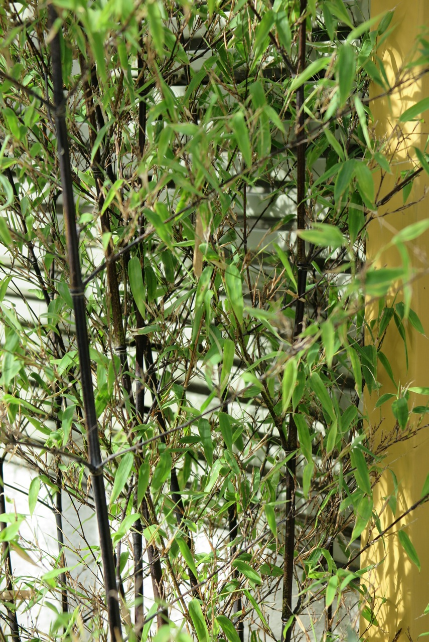 Dulwich garden, bamboo screen