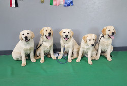 Ceilidh's pups all pass the CGC