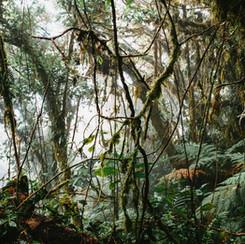Trees_Costa-Rica_Caroline-Rousseau_1363.
