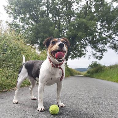 🥎 FETCH 🥎_Daisy's favourite way to spe
