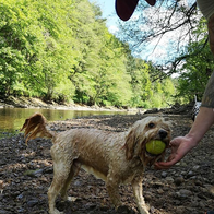 Fetch on a summers day - living the drea