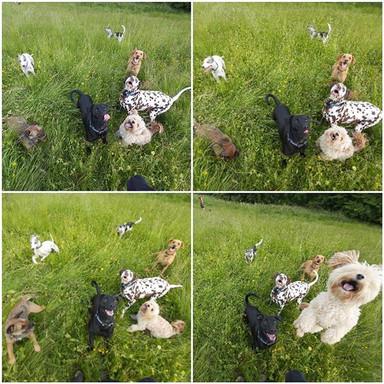 Fun bunch of pups ! 🐶.jpg