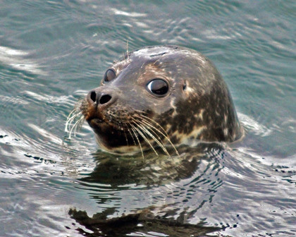 130913 Common Seal 1 nf.jpg