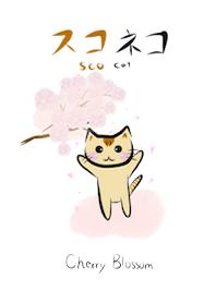 子猫 スコネコ スコティッシュフォールド お花見 さくら 着せかえ