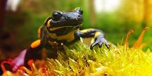 csm_salamander_bundesprogramm_548x274_03