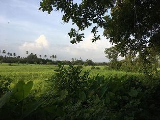 backyard_biodiversity.JPG