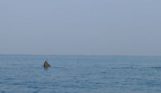 Copy of rising dolphin (1) (1).jpg