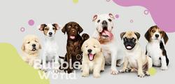 Bubble World Pet Spa