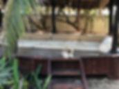 Bambudha Pets