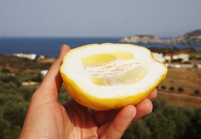 Ne citrina, o citronas