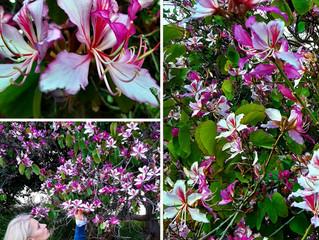 Orchidėjos Mamoms