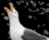 bird-806373.png