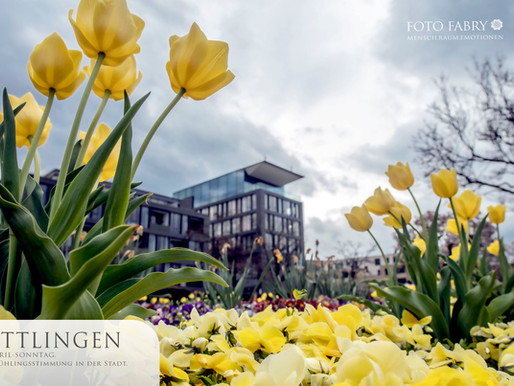 Ettlingen erblüht - Frühling an der Alb