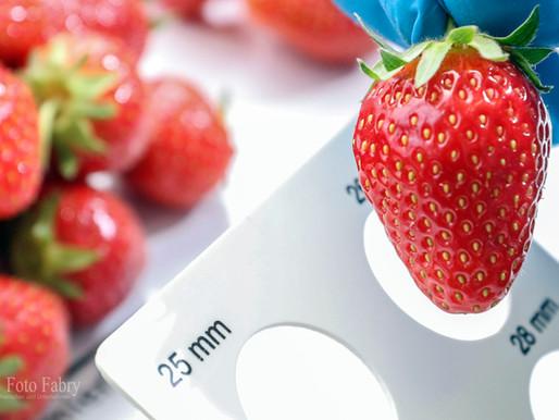 Erdbeer -Hochsaison