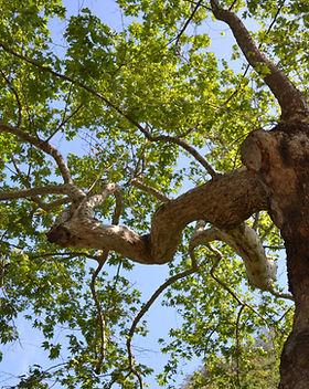 LEGIT TREE.JPG