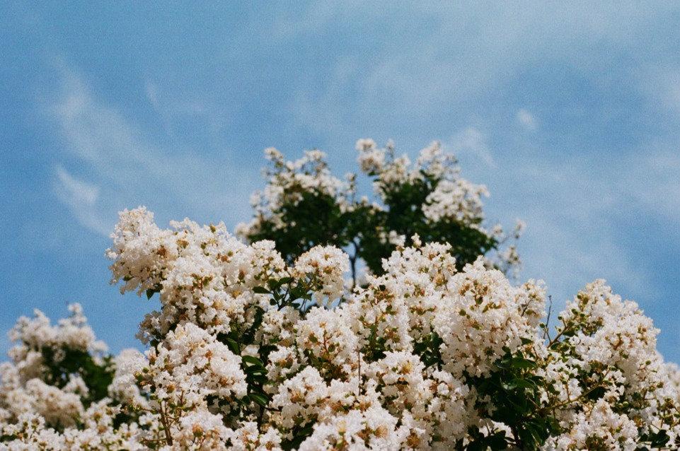 flowersandskyindc_edited.jpg