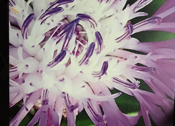 Floral Macro 4
