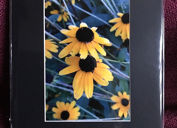 5 x 7 matted prints (black) - flowers