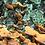 Thumbnail: Fungi-Lichen-Snail