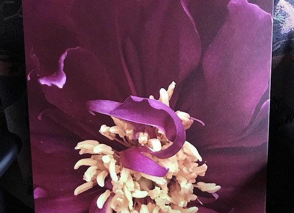Floral Macro 1