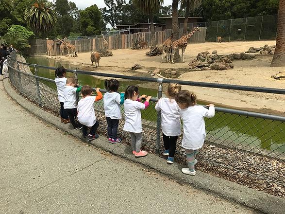 The preschoolers at San Francisco Zoo