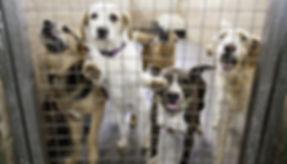 Best-Animal-Shelters-2.jpg