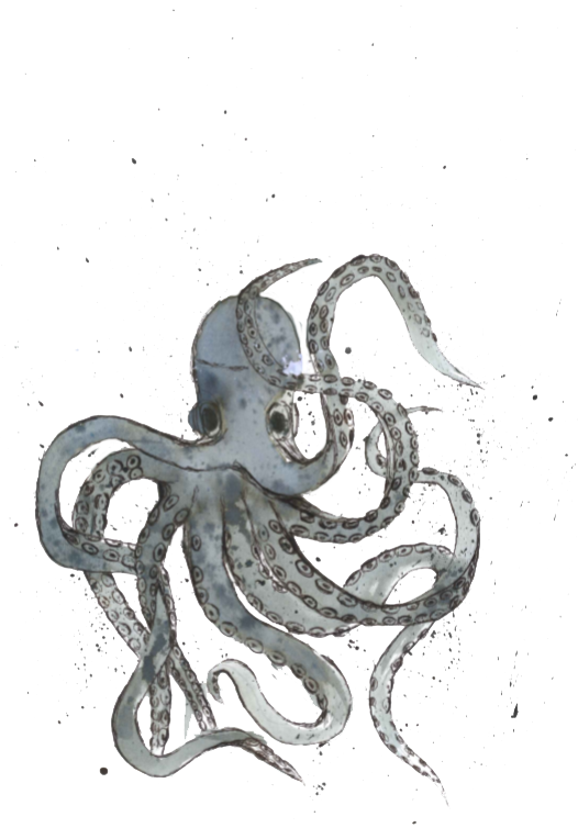 Octopus watercolour.