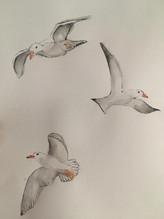 Seagulls watercolour.
