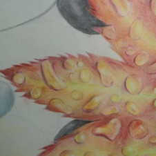 Pencil drawing of water on an autumnal leaf.