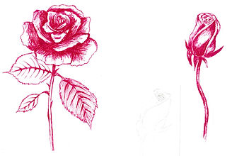 Open and Closed Rose Sketch in Red Biro Pen