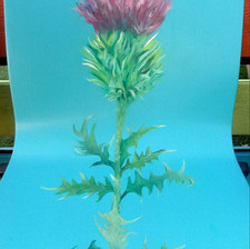 thistle drawing