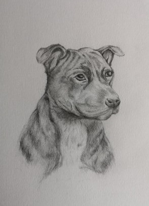 Pencil drawing of dog.