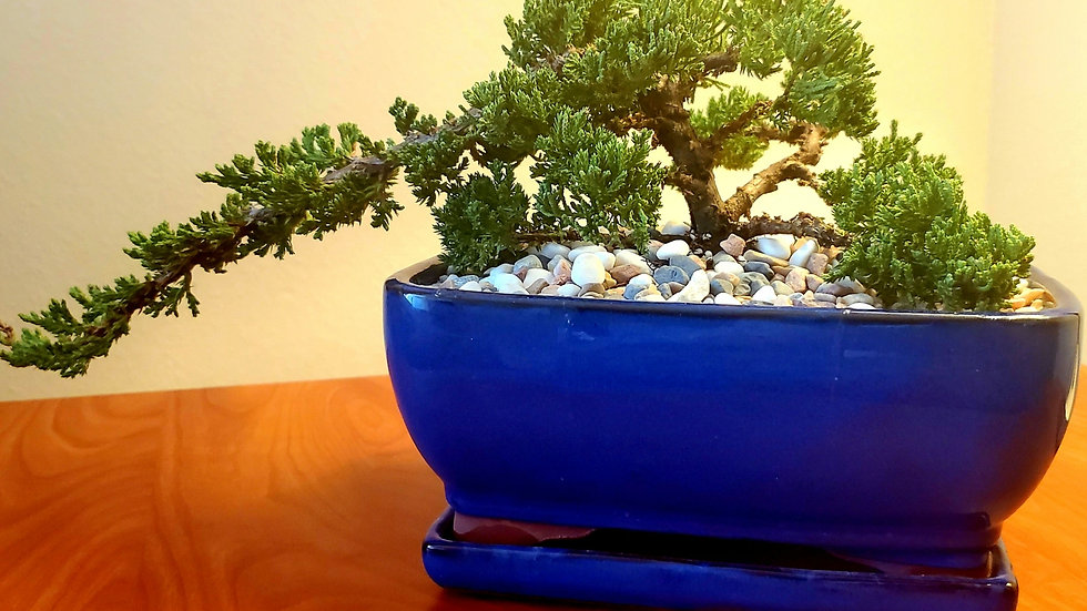Bonsai CenterPEACE