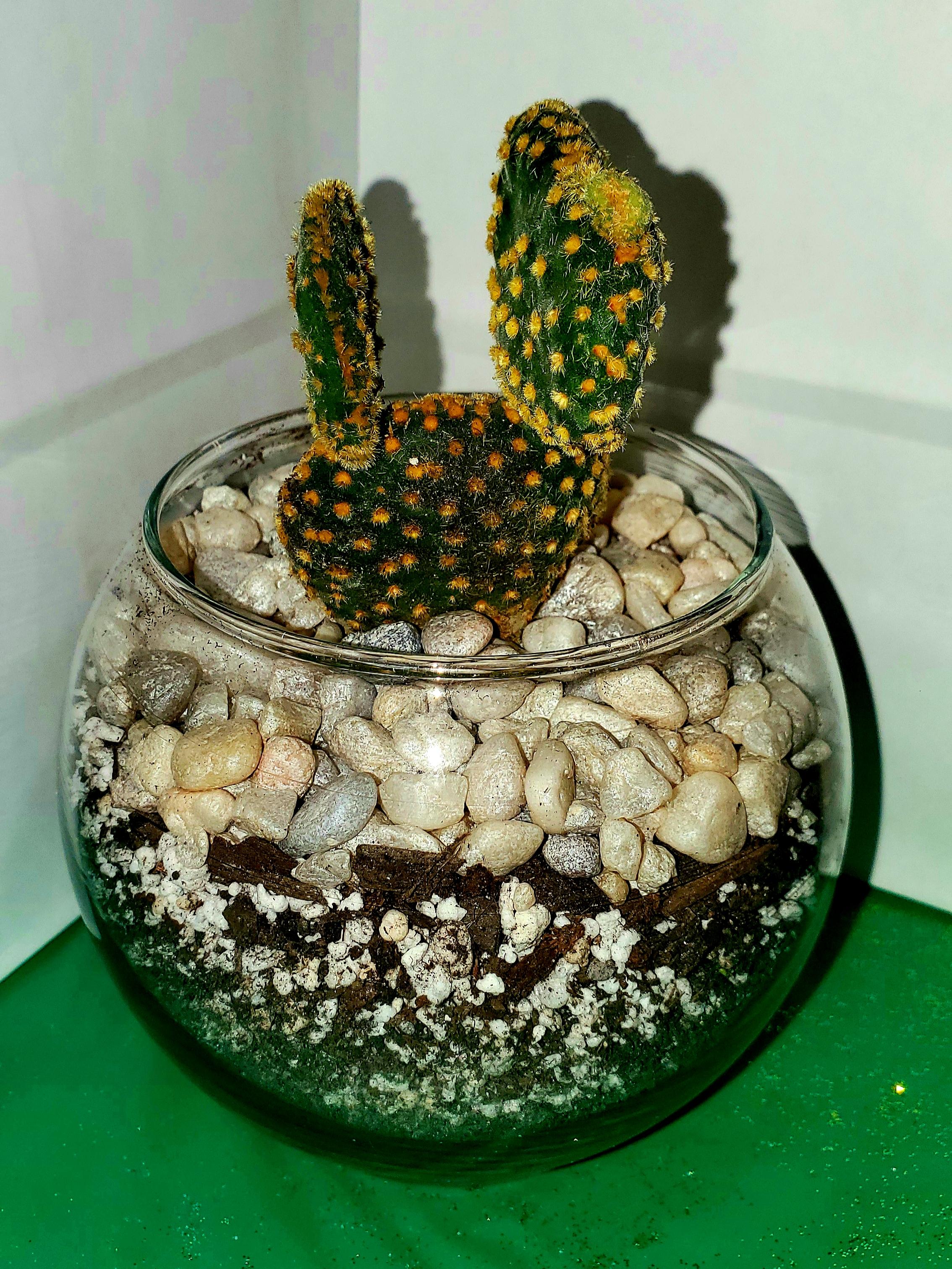 ALT Cactus 3.jpg