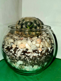 ALT Cactus 1.jpg