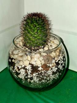 ALT Cactus 2.jpg