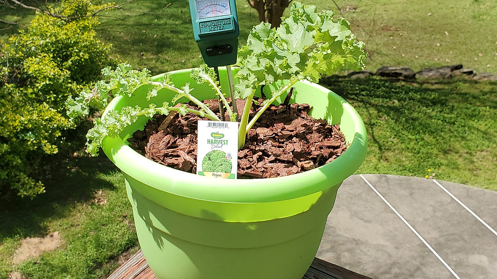 Fruit/Vegetable Container Garden