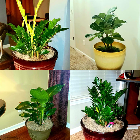 ALT Plant Staging.jpg