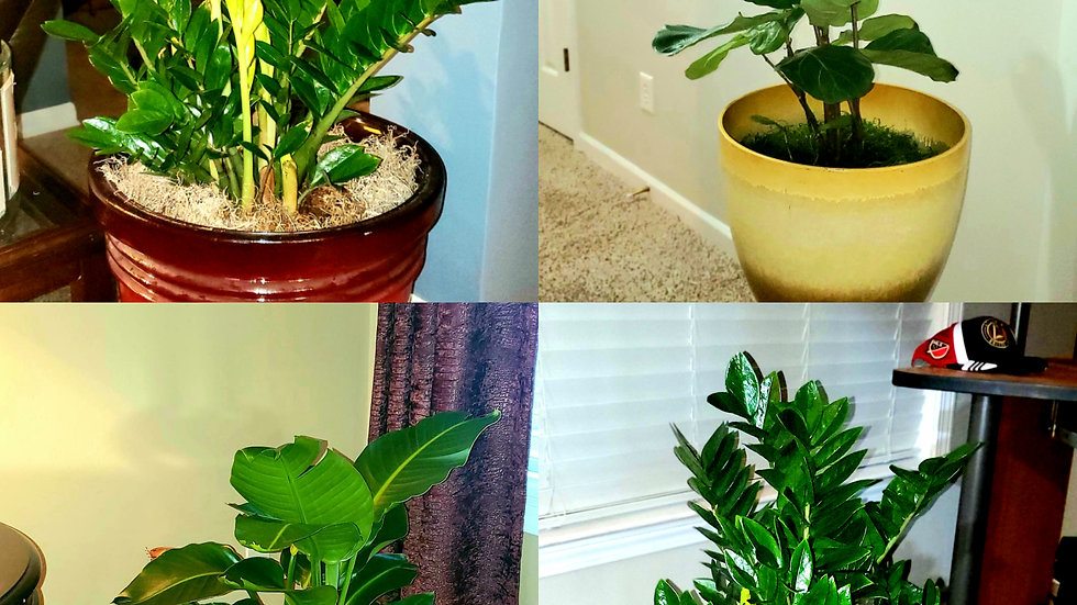 Indoor Plant Staging Packages