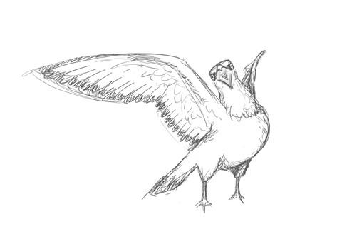Irate Pigeon
