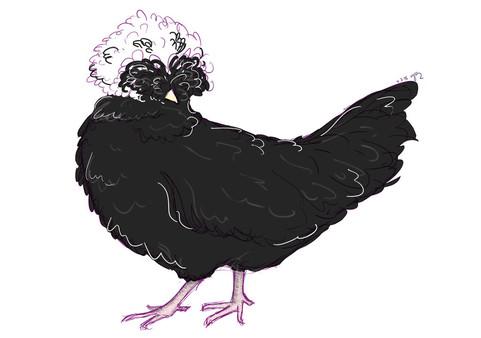 Roberta the Polish Chicken
