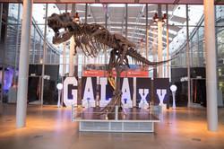 Dino bones galaxy