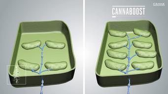 3D Animatie bacterie